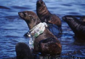 seal with plastic bag around neck